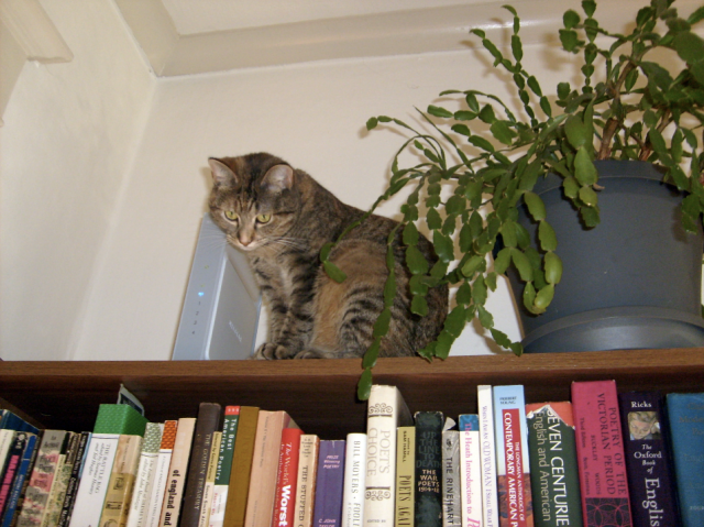 Baxter & the Books #2