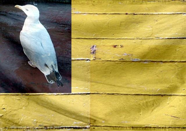 Seagull Flag